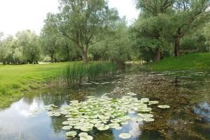 Rezervația Prutul de Jos-un ecosistem unic din R.Moldova