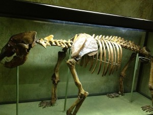 O zi-Un muzeu: Muzeul Naţional de Etnografie şi Istorie Naturală