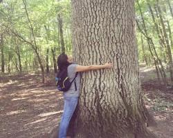 Printre stejarii seculari din Rezervația Naturală Pădurea Domnească