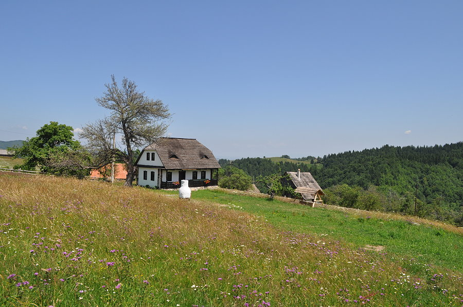 Casa Bunicii Bran (5)