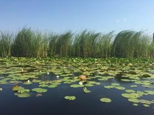 Zonele de pescuit din Rezervația Biosferei Delta Dunării
