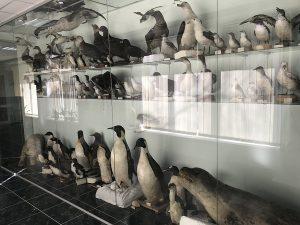(Română) Unul dintre cele mai puțin cunoscute muzee din Chișinău, Muzeul de Șiințe ale Naturii